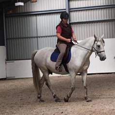 Classical riding and biomechanics, bitless and bitted